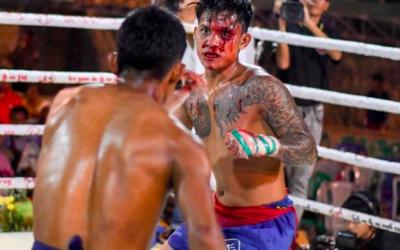 Piękno boksu Birmańskiego