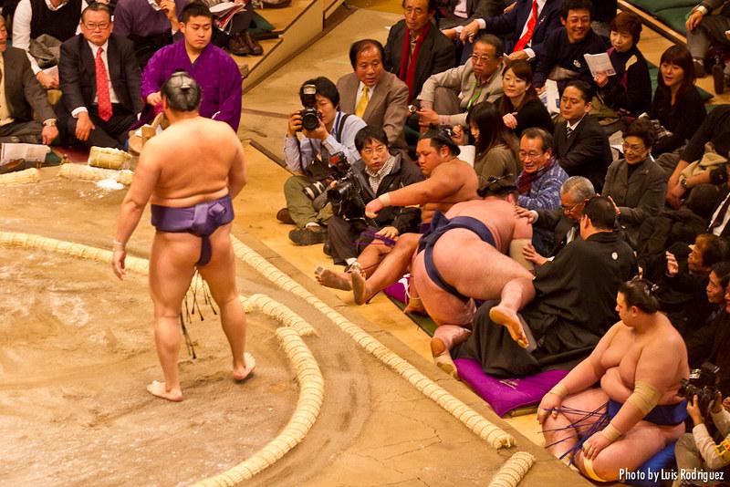Sędziowanie walk sumo!